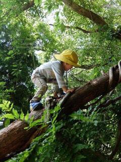 木と僕1の写真・画像素材[3174093]