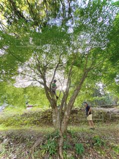 木登りの写真・画像素材[3212502]