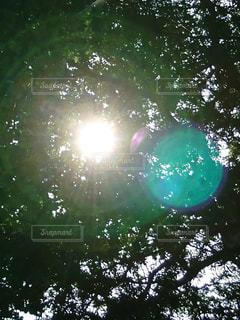 自然,日光,太陽光,樹,フォトジェニック,神社にて,樹木越しの太陽