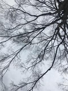 自然,風景,空,枝,樹木,くもり,草木
