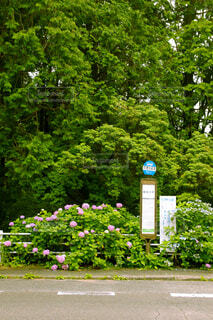 道路沿いにある紫陽花の写真・画像素材[4616314]