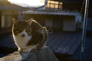 建物の上に座っているオレンジと白の猫の写真・画像素材[3168432]