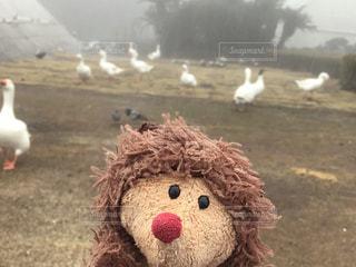 動物,鳥,屋外,ぬいぐるみ,伊豆,シャボテン公園,はりーくん