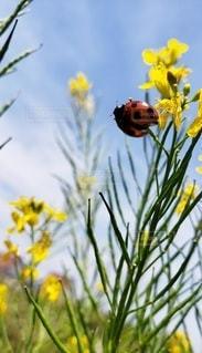 花,屋外,黄色,草木