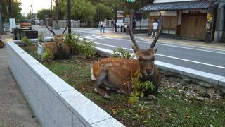 動物,鹿,草木