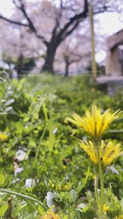 花,屋外,黄色,樹木,草木,フローラ