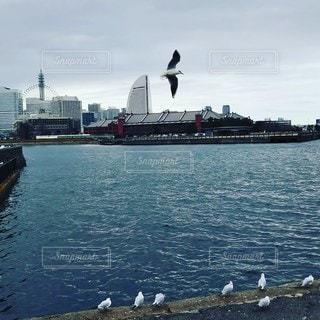 海,鳥,船,横浜,カモメ