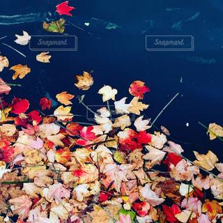 自然な色の写真・画像素材[3172595]