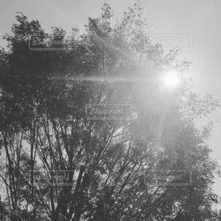 木のクローズアップの写真・画像素材[4437808]