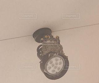 夜,屋内,暗い,照明,明るい,ツバメ,雛,点灯
