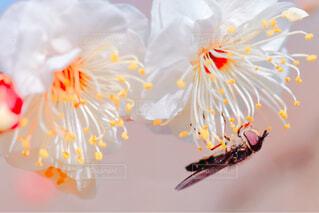 梅の香りに誘われての写真・画像素材[4356655]
