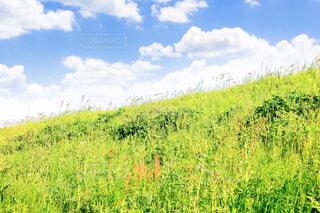 緑の丘と白い雲の写真・画像素材[4412524]