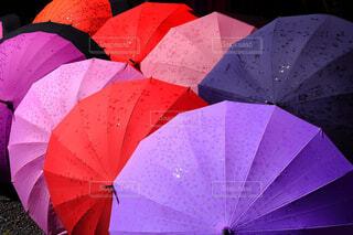 傘の花咲くの写真・画像素材[4554075]