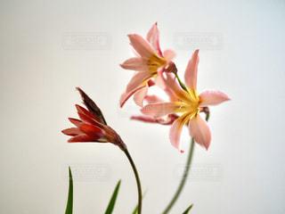 我が家の庭に咲いていた花の写真・画像素材[3206265]