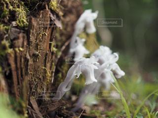 森の妖精の写真・画像素材[3278013]