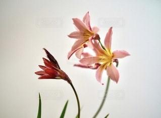 お庭の花の写真・画像素材[3572005]