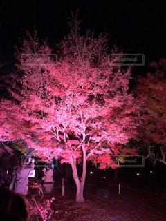 夜,夜桜,ライトアップ,景観