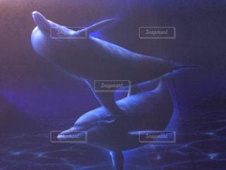 イルカ,水族館,サメ
