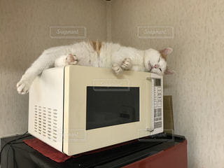 猫,動物,白,昼寝,壁,電子レンジ,猫あるある