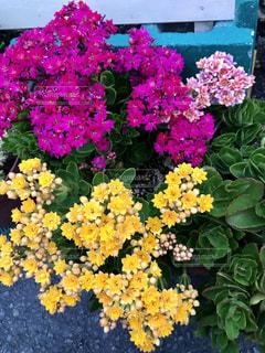 花,紫,黄色,景色,鮮やか,カラー,草木,ガーデン