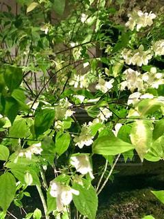 花,緑,白,葉,樹木,新緑,ガーデン,フローラ