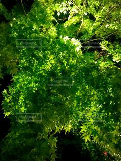 緑豊かな森の近くの写真・画像素材[3208995]