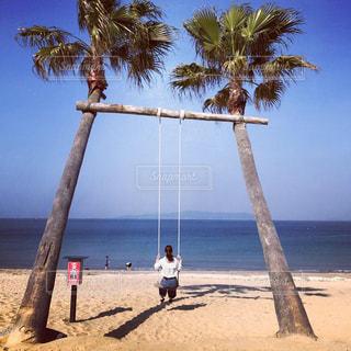 海,空,屋外,ビーチ,砂浜,ヤシの木