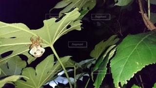 夜,静か,葉,昆虫,夏休み,初夏,草木,蝉の羽化