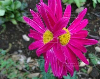 花,屋外,鮮やか,幸福,ダンス,草木,寄り添う,ふたりでひとつ,支え合う