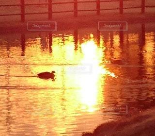 沈む夕陽を浴びる水鳥の写真・画像素材[3194972]