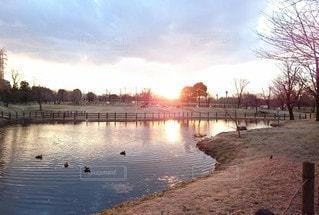 自然,空,鳥,屋外,湖,夕暮れ,水面,樹木,鴨,幸福,日中,穏やか,安らぎ