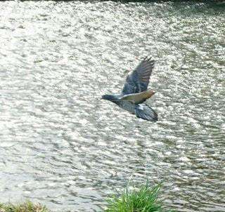 羽ばたく鳥と輝く水面の写真・画像素材[3194979]