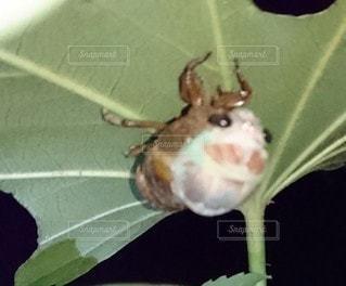 昆虫のクローズアップの写真・画像素材[3194980]