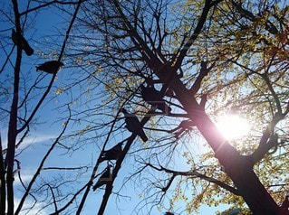 大きな木の枝に休む鳥達の写真・画像素材[3201606]
