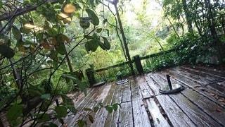 雨の日のcafe テラスの写真・画像素材[3215802]