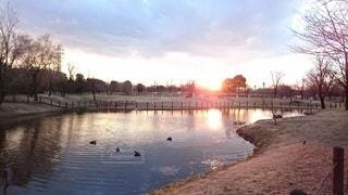 池に映る沈む夕陽の写真・画像素材[3321357]