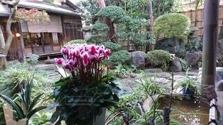 古民家カフェの庭の写真・画像素材[3323535]