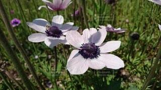 花のクローズアップの写真・画像素材[3345386]