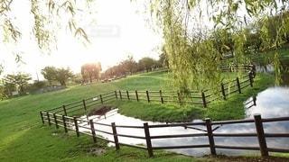 緑豊かな公園の写真・画像素材[3363467]