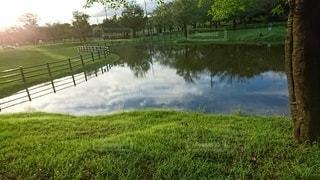 緑豊かな公園の写真・画像素材[3363469]