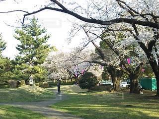 春爛漫の写真・画像素材[3387789]