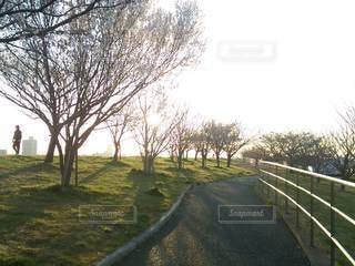 河川敷の昼下りの写真・画像素材[3387788]