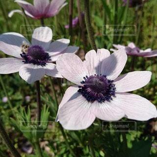 花のクローズアップの写真・画像素材[3574905]
