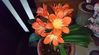 サボテンの花の写真・画像素材[3574908]