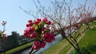 鮮やか色の蕾の写真・画像素材[3582009]