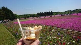 富士山,手持ち,人物,芝桜,ポートレート,ピンク色,ライフスタイル,手元,ひと息,あまーい,大人の休憩時間