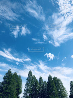 自然,風景,空,木,雲,青空,景色