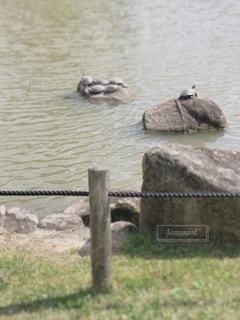 自然,公園,池,カメ,亀