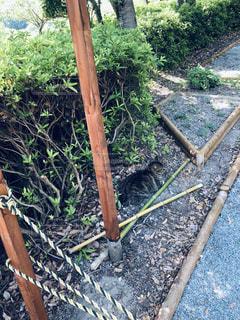 猫,草木,立ち入り禁止,荒地,知らんぷり,荒れ地