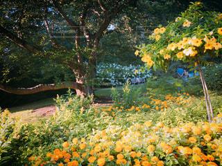 #花,#木,#おしゃれ,#フラワー,#ガーデン,#Longwood Gardens